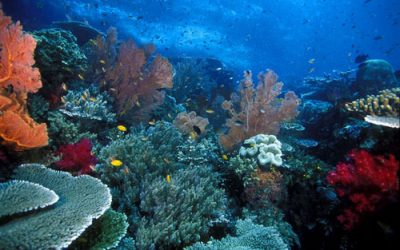Guide on Diving in Gilis